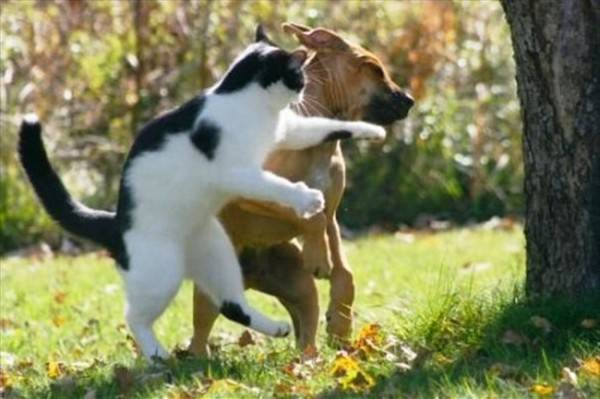 Самые смешные приколы про собак и кошек   подборка фоток (1)
