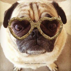Самые смешные приколы про собак и кошек   подборка фоток (19)