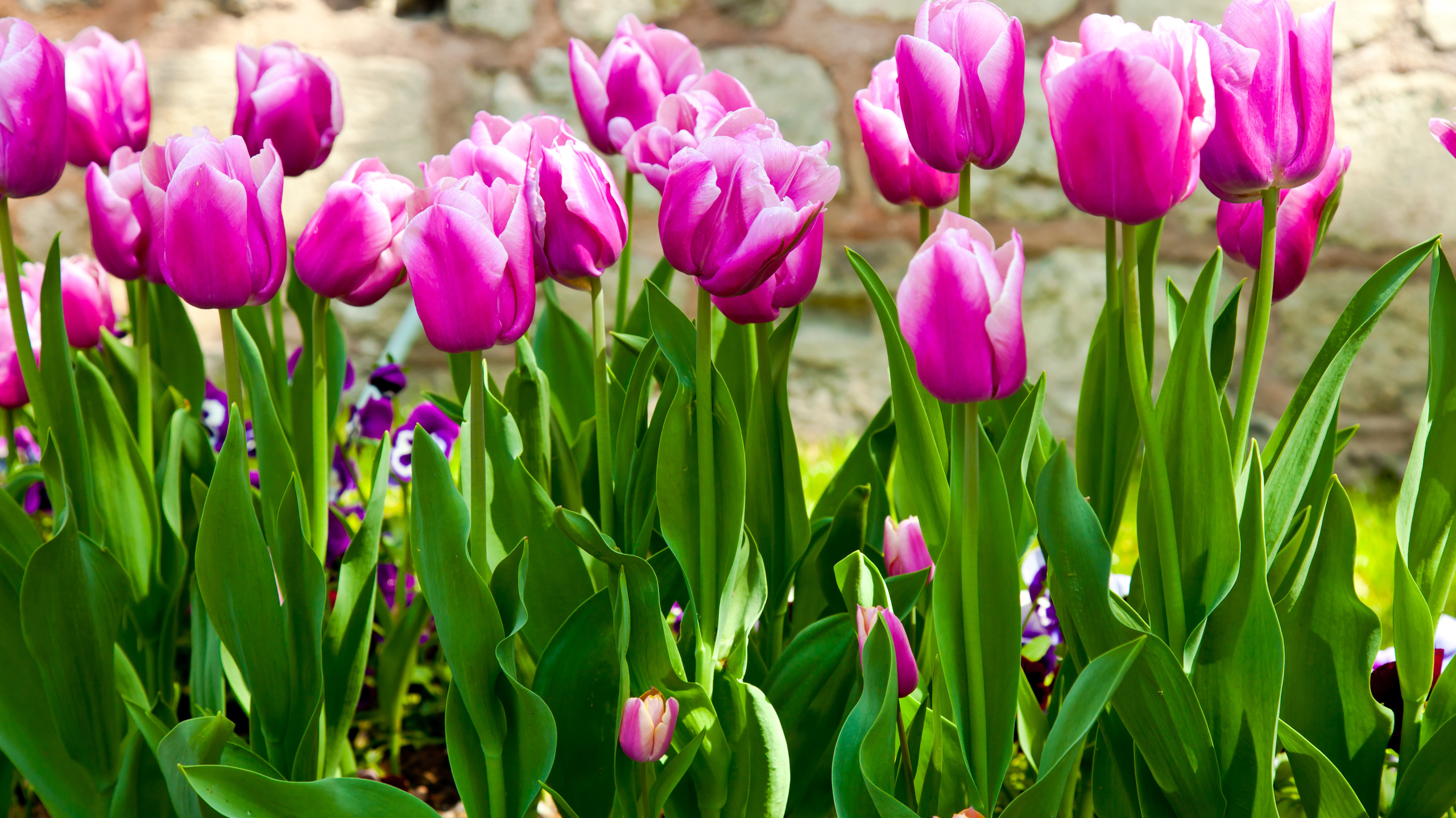 Крупные картинки на рабочий стол весна