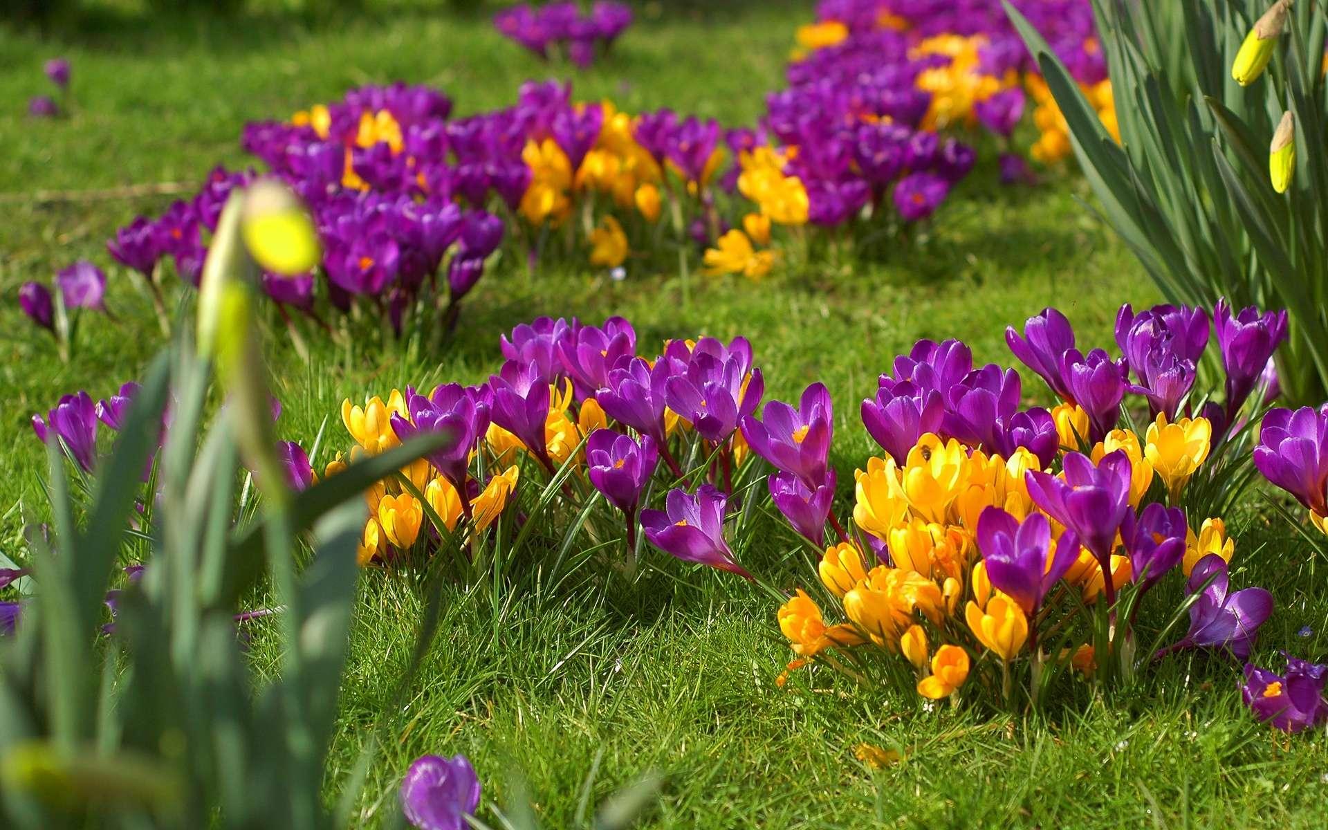 Спасибо, картинки на рабочий стол красивые цветы весна