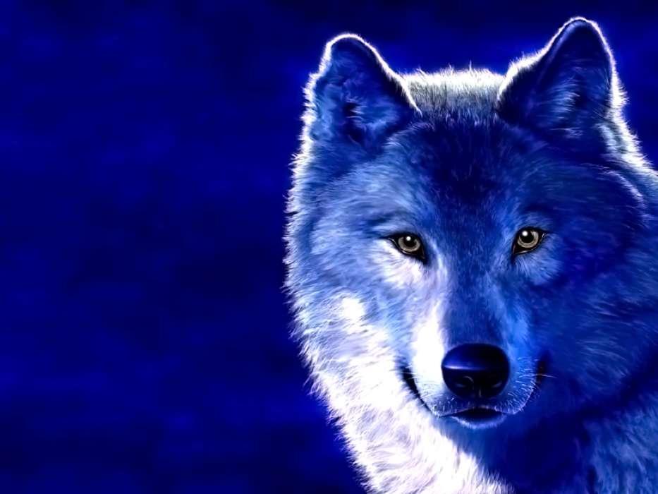Скачать на телефон картинки волки   лучшие заставки (1)