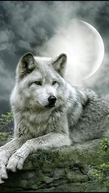Скачать на телефон картинки волки   лучшие заставки (12)