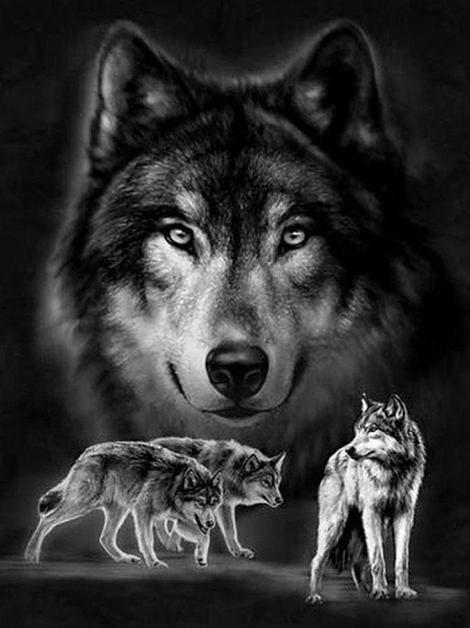 Скачать на телефон картинки волки   лучшие заставки (17)