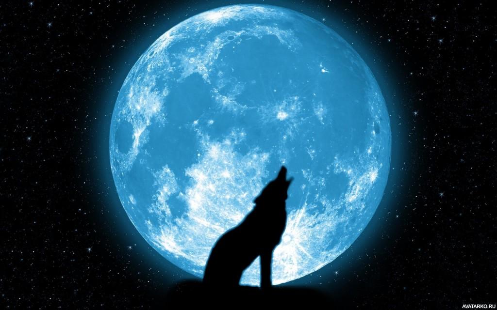 Скачать на телефон картинки волки   лучшие заставки (19)