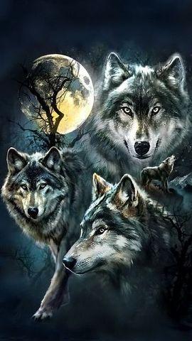Скачать на телефон картинки волки   лучшие заставки (2)