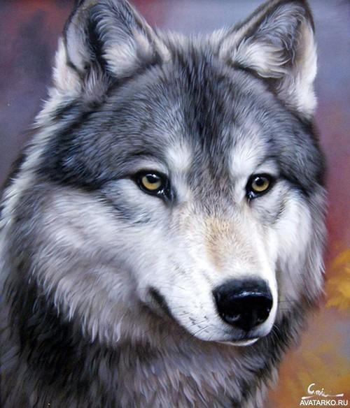 Скачать на телефон картинки волки   лучшие заставки (20)