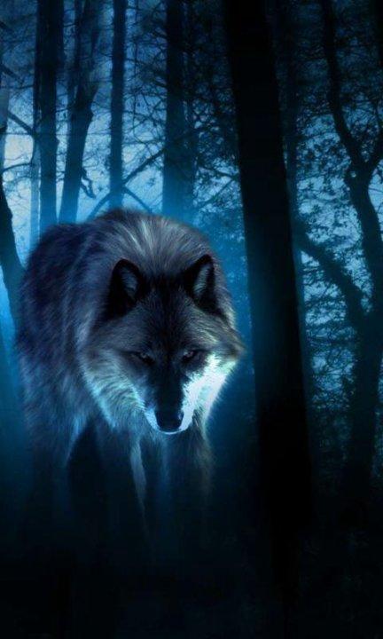 Скачать на телефон картинки волки   лучшие заставки (22)