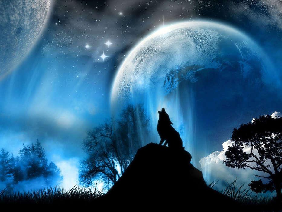 Скачать на телефон картинки волки   лучшие заставки (24)
