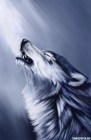 Скачать на телефон картинки волки   лучшие заставки (28)