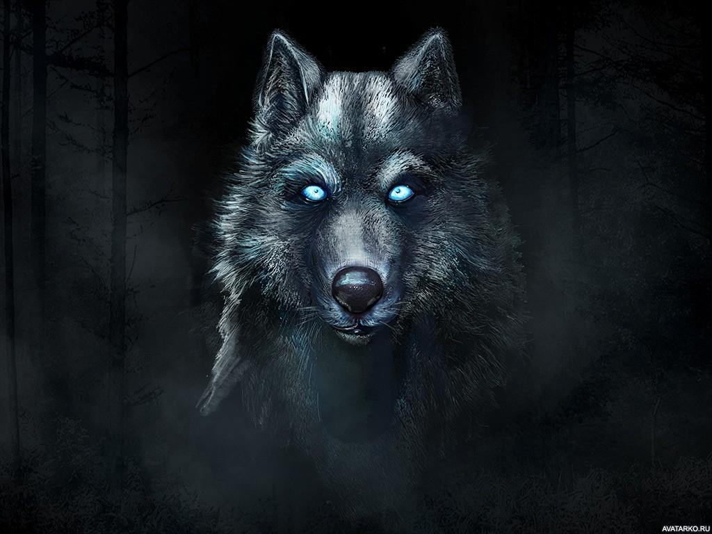 Скачать на телефон картинки волки   лучшие заставки (30)