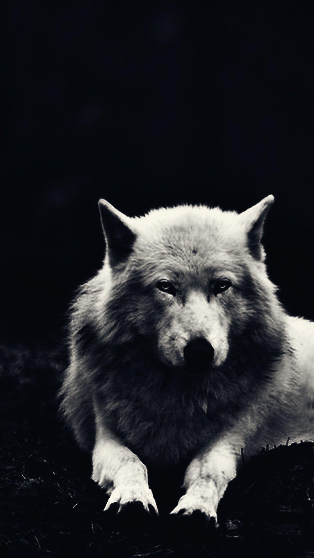 Скачать на телефон картинки волки   лучшие заставки (35)