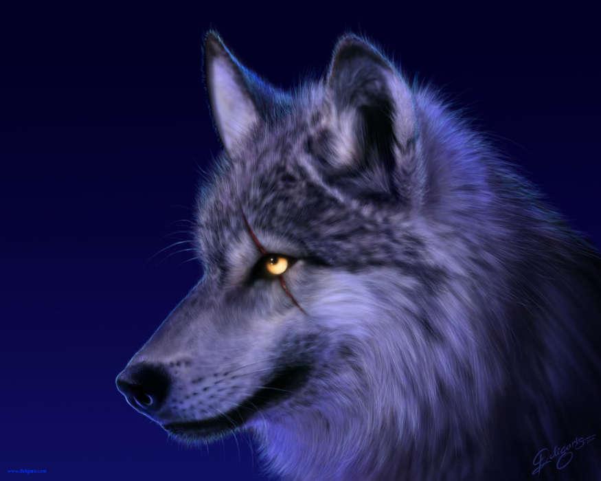 Скачать на телефон картинки волки   лучшие заставки (4)