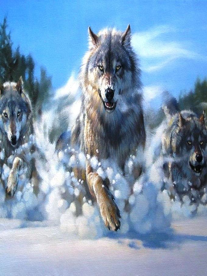 Скачать на телефон картинки волки   лучшие заставки (6)