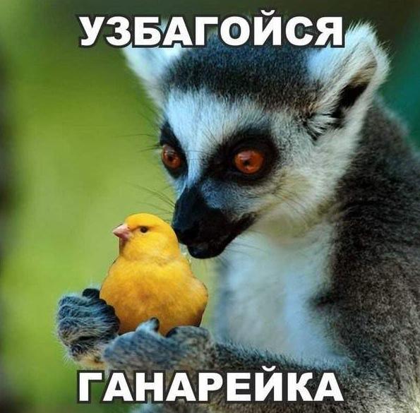 Аватарки смешные скачать бесплатно   подборка024