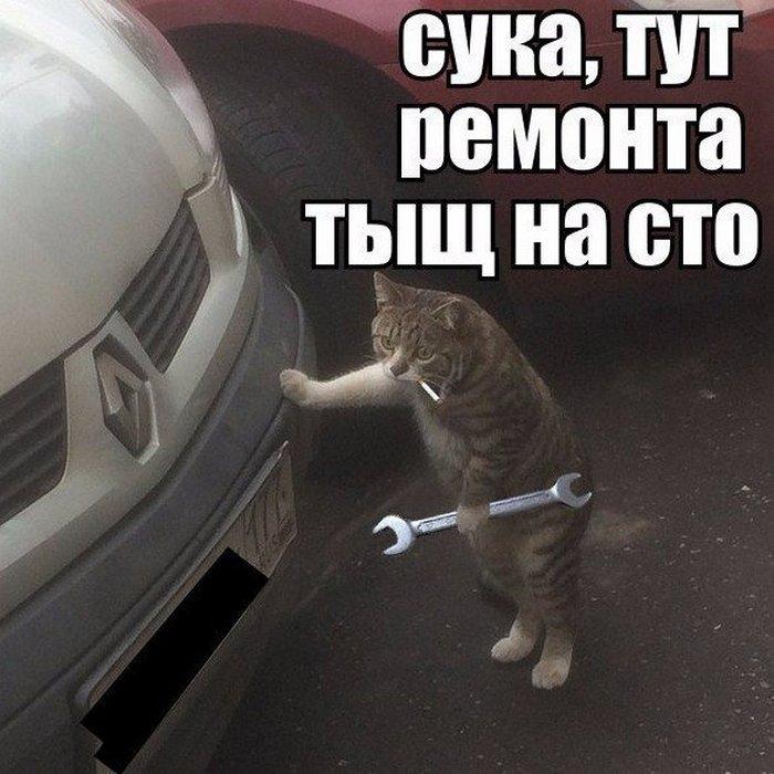 Автоприколы фото с надписями смешные до слез012