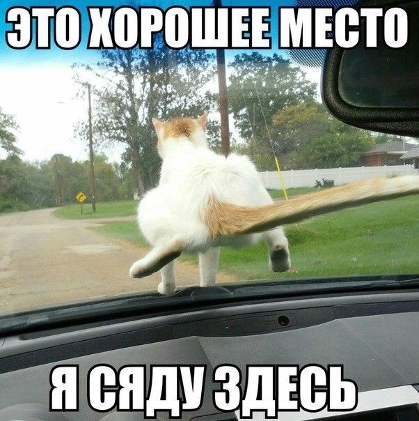 Автоприколы фото с надписями смешные до слез018