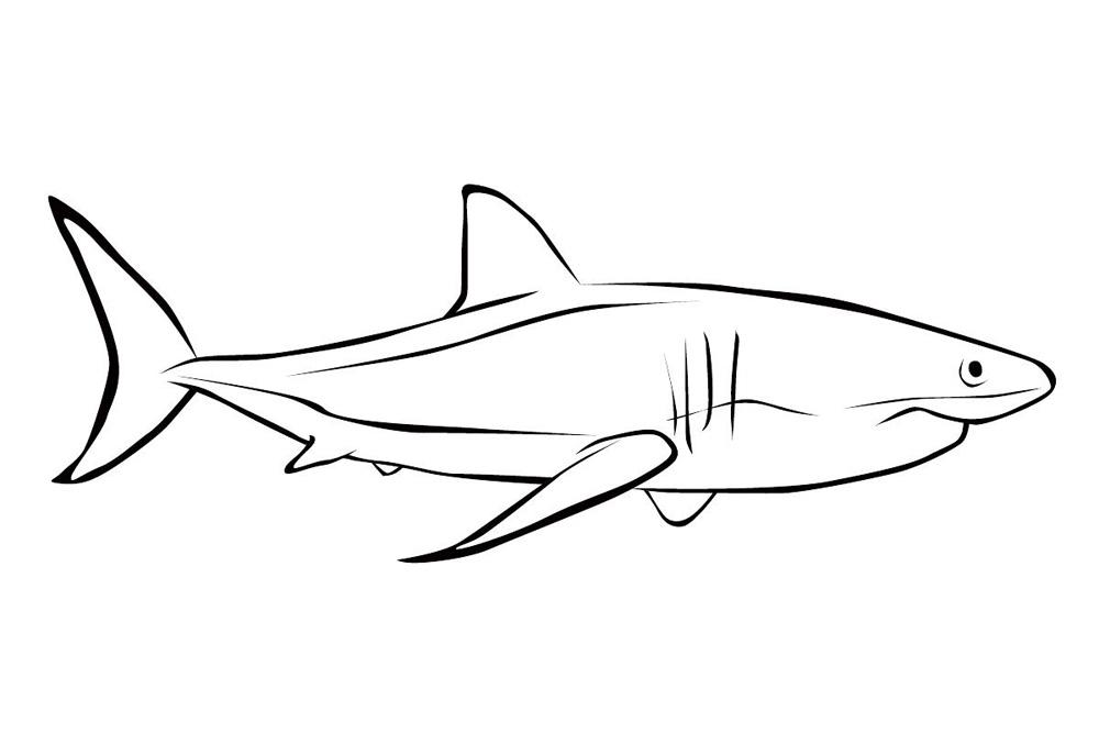 Картинка для раскрашивания акулы