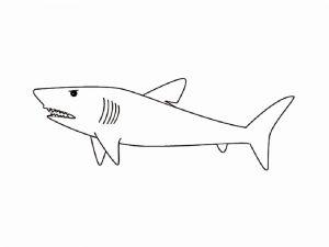 Акула картинка для детей раскраска 029