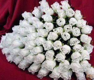 Алые розы фото букеты   подборка018