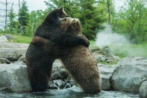 Арты медведи   красивые картинки028