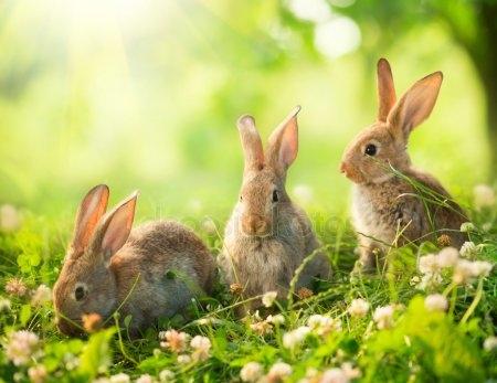 Арт кролики красивые картинки001