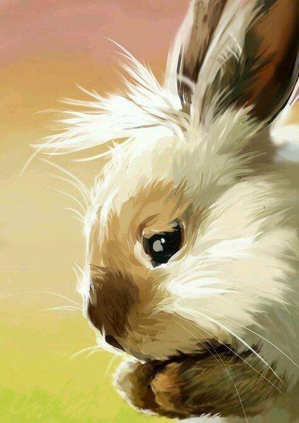 Арт кролики красивые картинки002