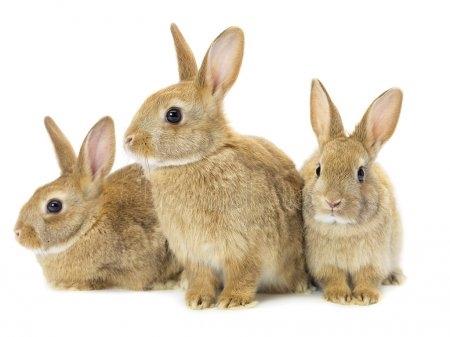 Арт кролики красивые картинки003