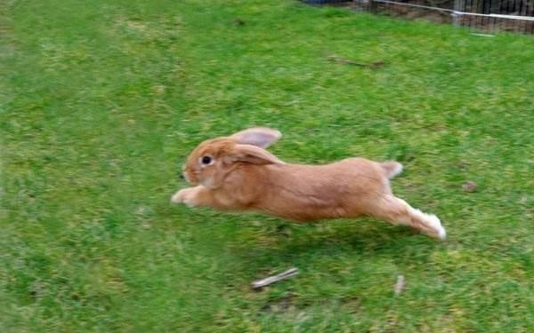 Арт кролики красивые картинки006