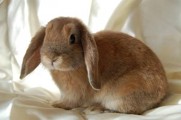 Арт кролики красивые картинки007