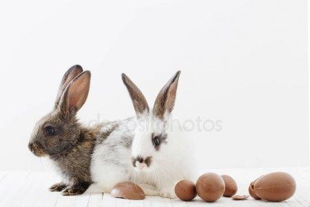 Арт кролики красивые картинки008