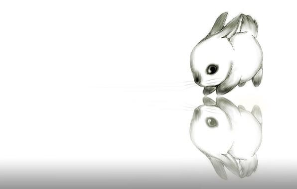 Арт кролики красивые картинки010