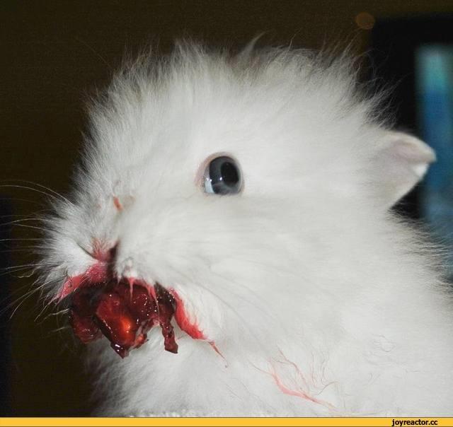 Арт кролики красивые картинки012