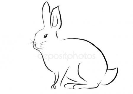 Арт кролики красивые картинки017