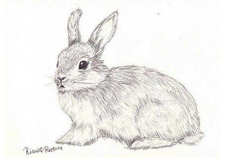 Арт кролики красивые картинки018