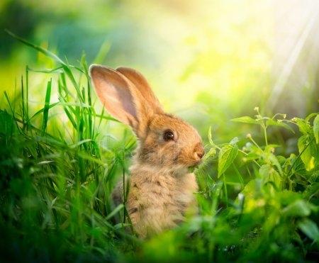 Арт кролики красивые картинки021