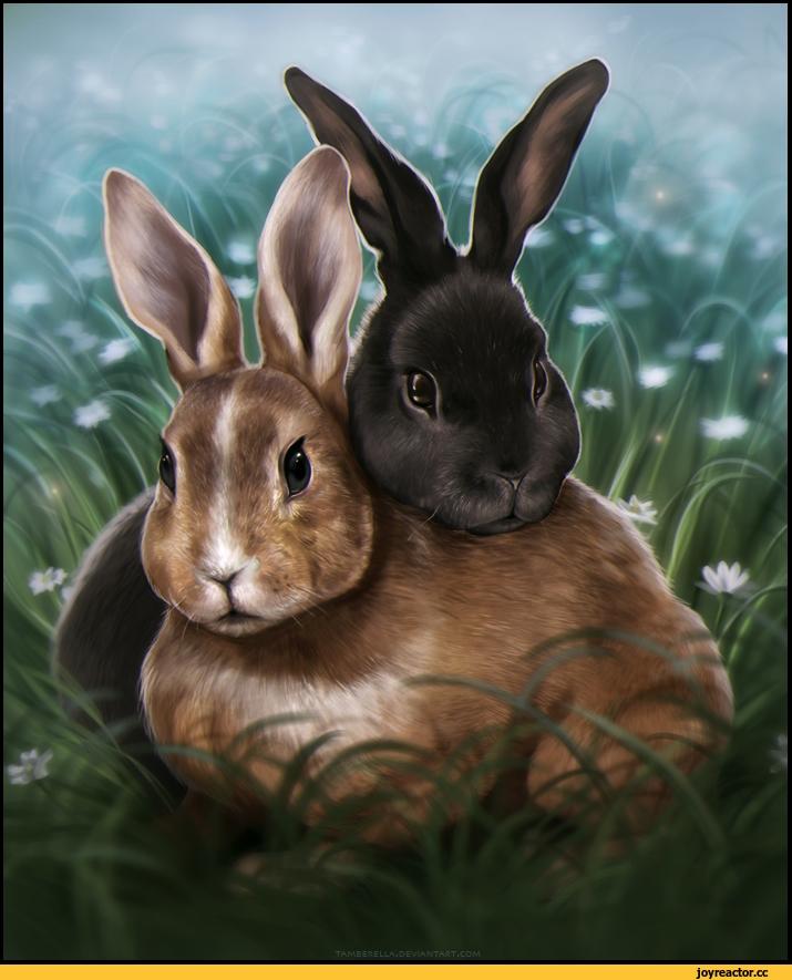 Арт кролики красивые картинки025