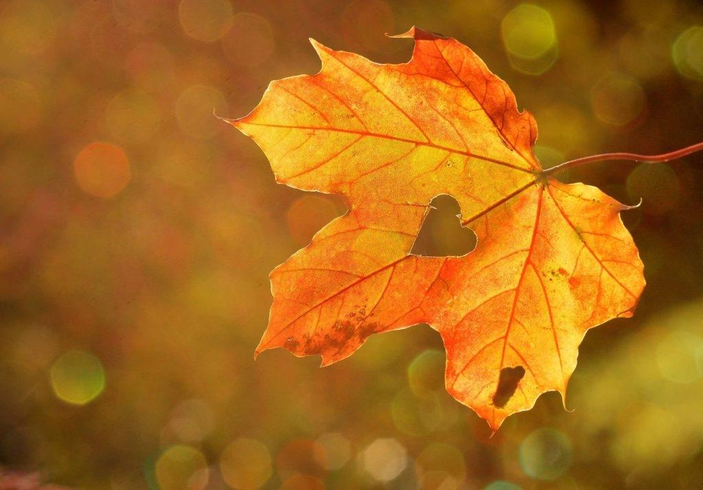 А завтра осень картинки и открытки красивые 015