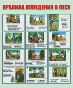 Безопасность в лесу для детей в картинках   подборка (39)