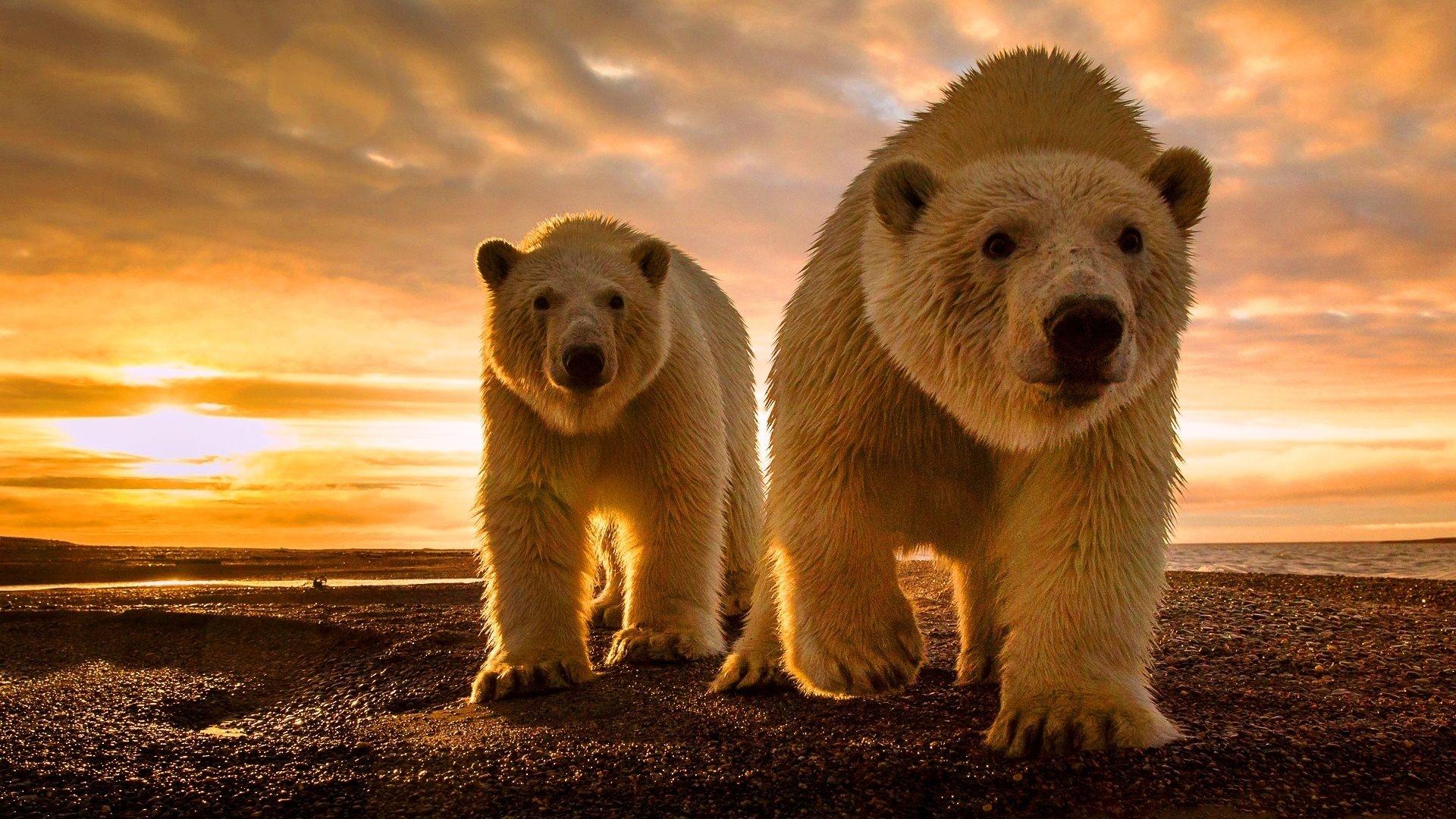 предлагаю приготовить обои на рабочий стол медвежонок трава этому