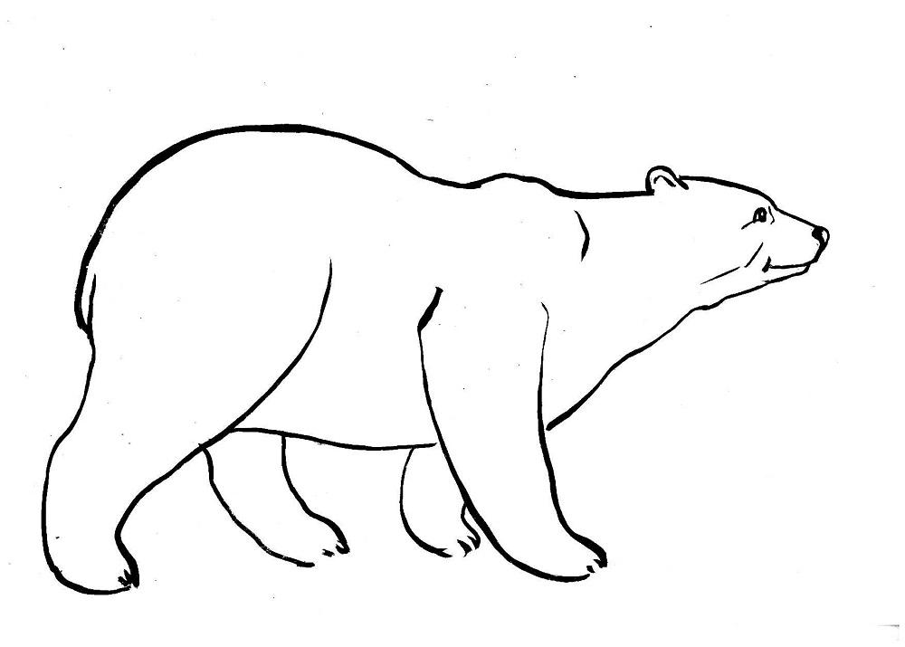 Белый медведь рисунок для детей   прикольные картинки 029