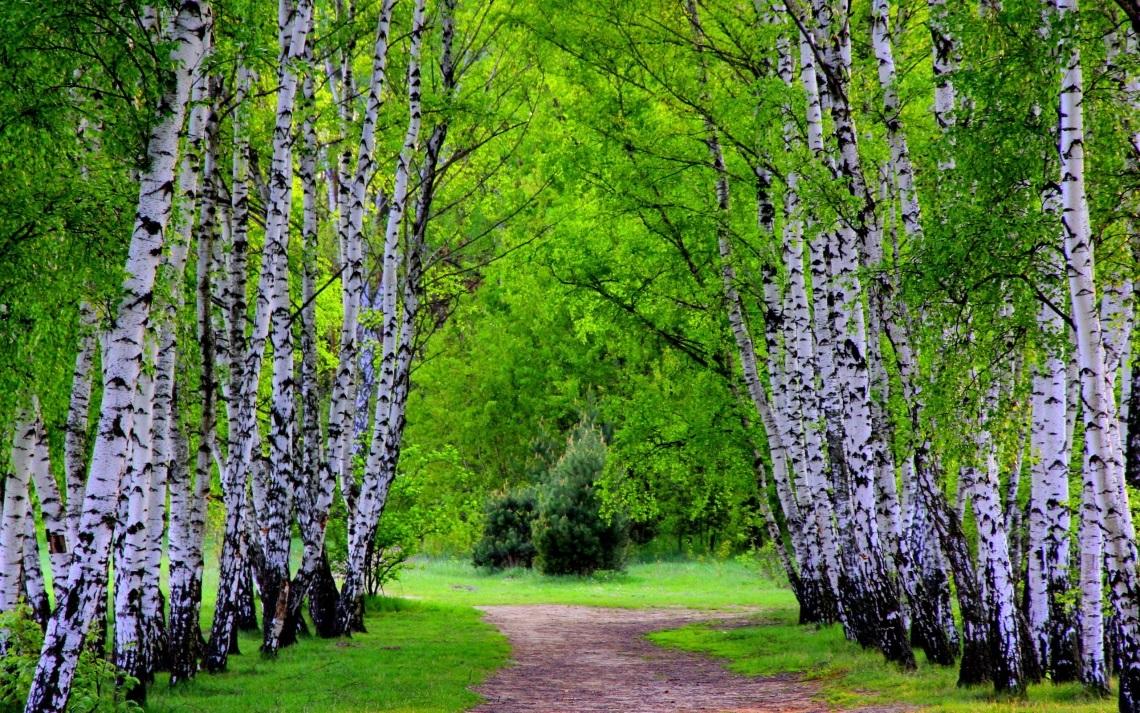 Весенний лес фото на рабочий стол