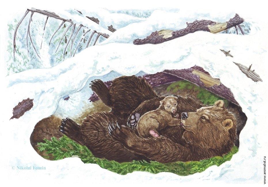 Картинки медведя в берлоге зимой в лесу