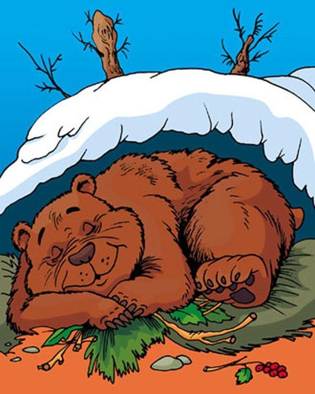 Берлога медведя в лесу картинки