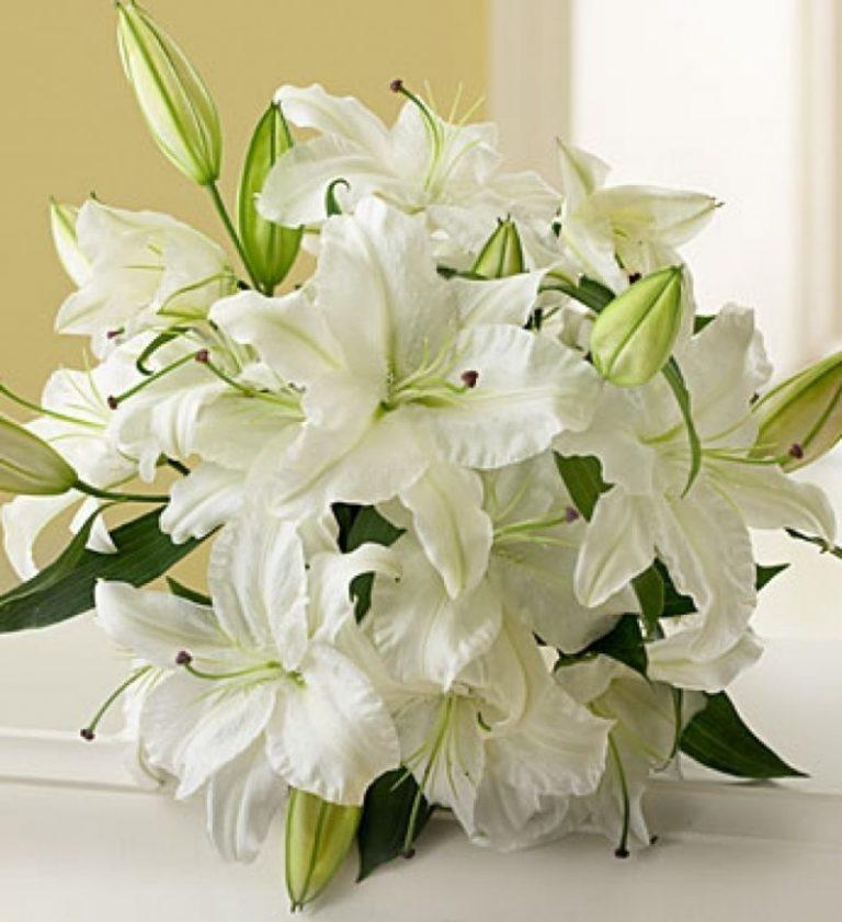 Свиньи картинки, красивые открытки с белыми лилиями