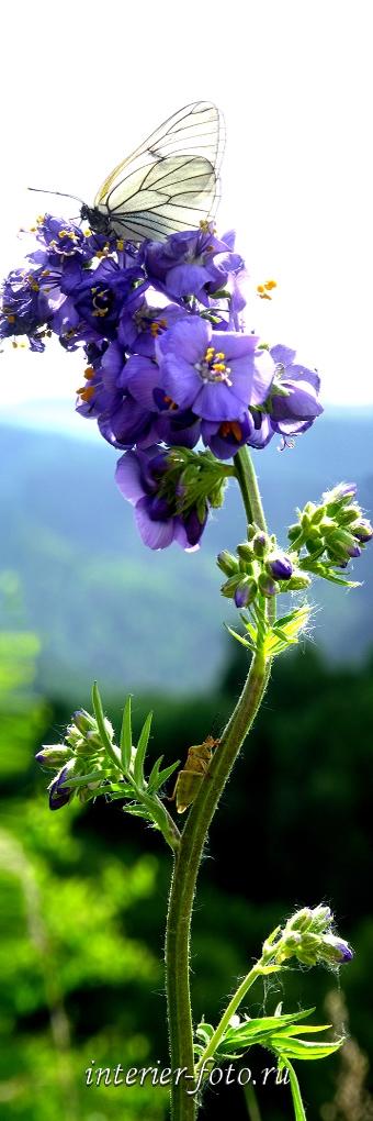 Вертикальные картинки красивые цветы   фото 023