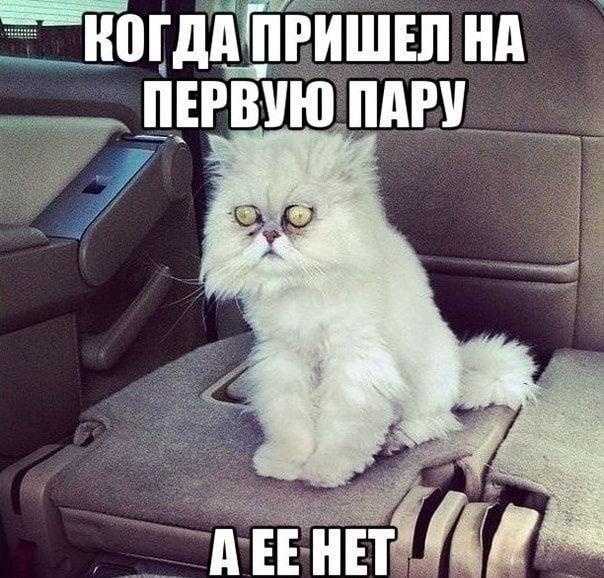 Веселые и прикольные картинки про экзамены 010