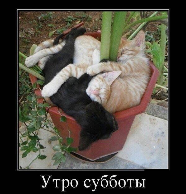 Веселые и смешные фото про субботу006