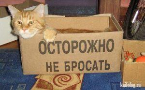 Веселые картинки про котов 029