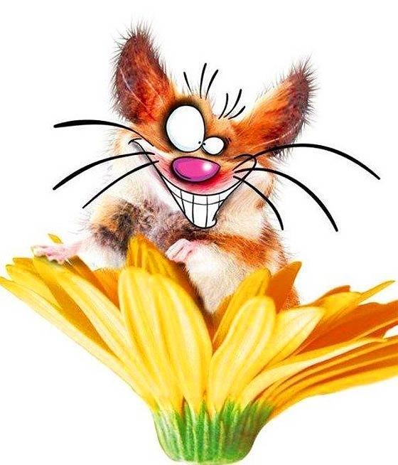 Веселые картинки животных рисованные, картинки анимационные марта
