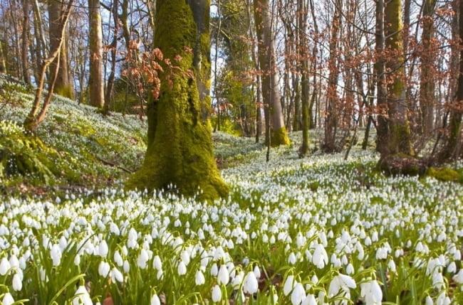 Весна май фото и картинки красивые 001